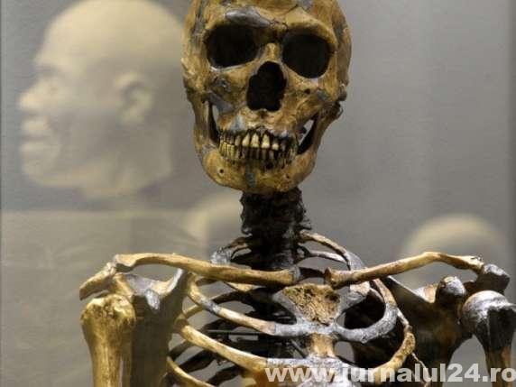 <h4><strong>Schelet uman în vârstă de 500 de ani.</strong></h4>