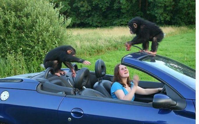 maimuta haios