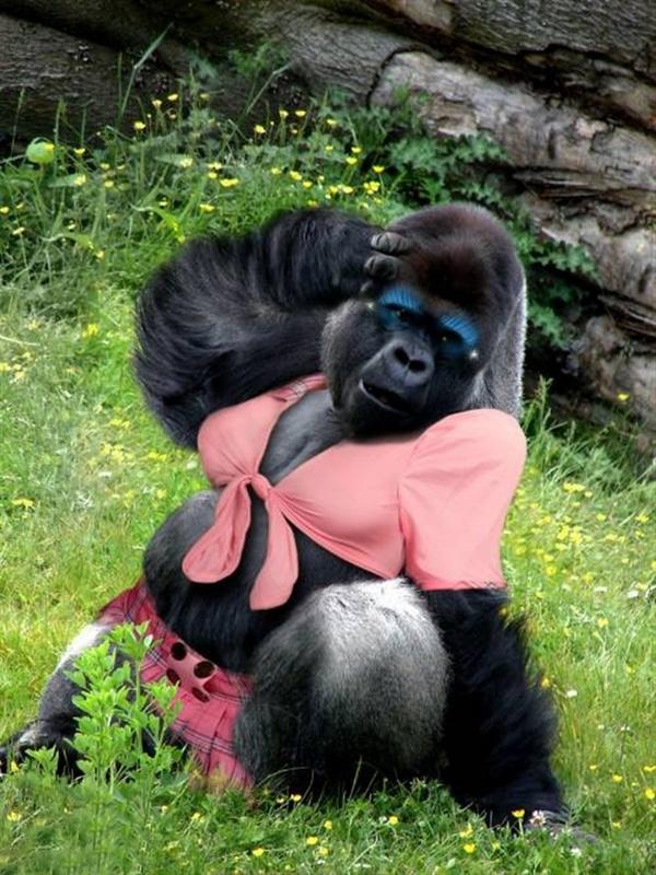 poza-cu-maimuta-femela
