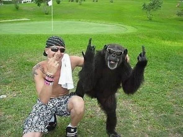 poza funny maimuta