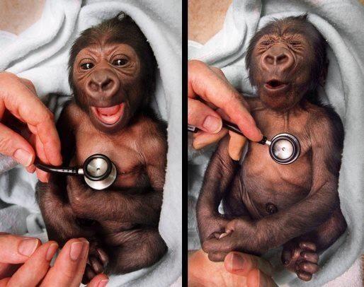 poza maimuta haioasa