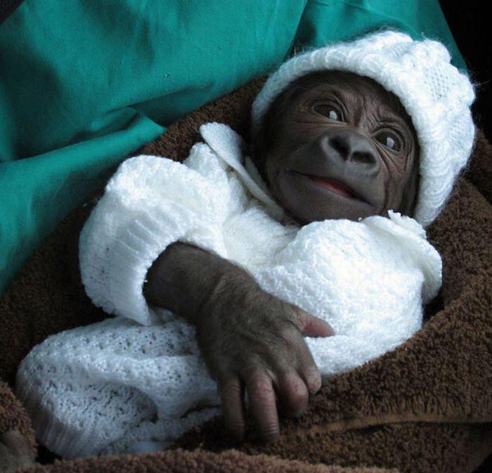 poza tare maimutica